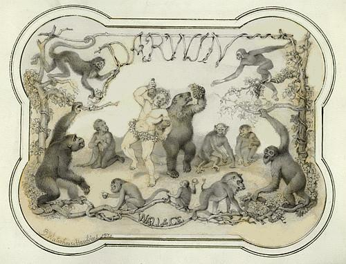 """An ingenious and labored anti-Darwinian exercise inspired by The Descent of Man of the same date (1871); also a bit of a temperance tract. Original artwork displaying a miniaturist's skill. But for what purpose? The decorative margin and minute detail suggest lanternslide copy. If the figures had been intended as book illustrations BWH would have drawn them directly on the lithographic stone. The skeleton-on-body-silhouette renderings recall those in Hawkins's Comparative view of the Human and Animal Frame"" -- Baird. Darwin - Wallace / B. Waterhouse Hawkins, 1871. Image available via Academy of Natural Sciences."