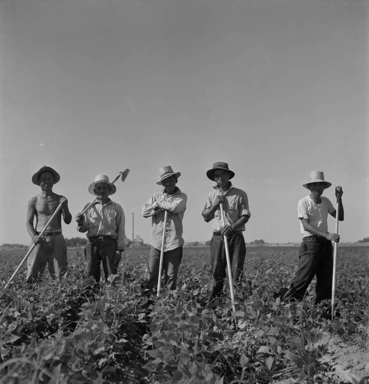 Farm laborers from the Twin Falls camp, July 1942. LC-USF34-073809-E. From Uprooted Exhibit.