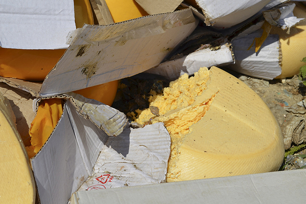 A broken head of cheese lies on the ground as illegally imported food is bulldozed in Russia's Belgorod region. Reuters.