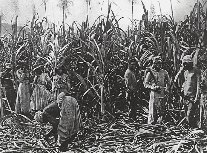 Sugarcane harvesters, Reunion Island c.1885