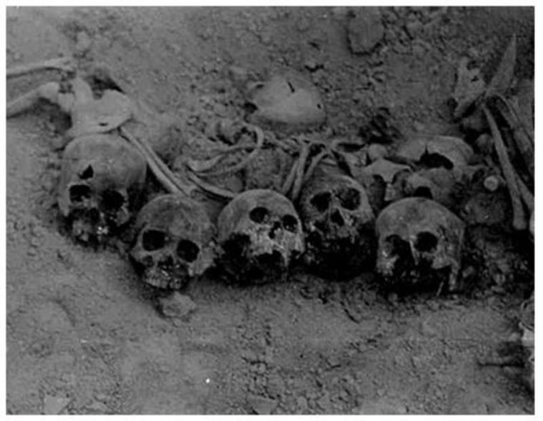 Skulls from a Mass Grave Uncovered in a Cave Outside of Taegu in 1960. Source: Truth and Reconciliation Commission, Republic of Korea.
